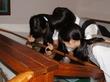 信州AL 高校2年生は国内校外ALの集大成へ