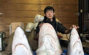 東京湾に生息するサメの種類の研究